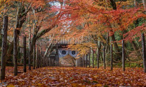 京都光明寺