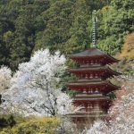 奈良長谷寺