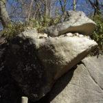 茨城県筑波山のガマ石